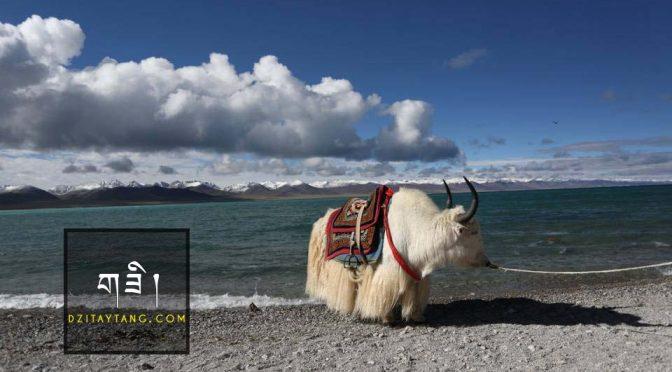 Giá trị thật sự của Đá Dzi Tây Tạng?